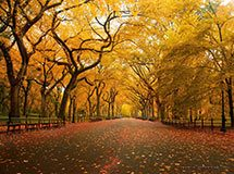 Central Park in autumn, New York City, USA
